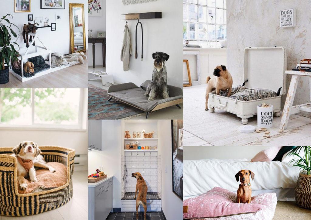 Interiorismo para mascotas